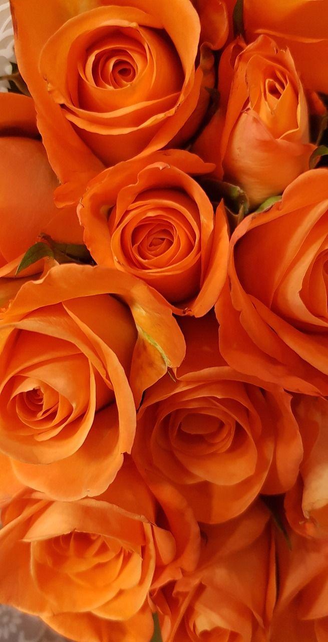 Roses Orange Blossom Bloom Flower Orange Rose Orange Aesthetic Orange Wallpaper Orange Roses