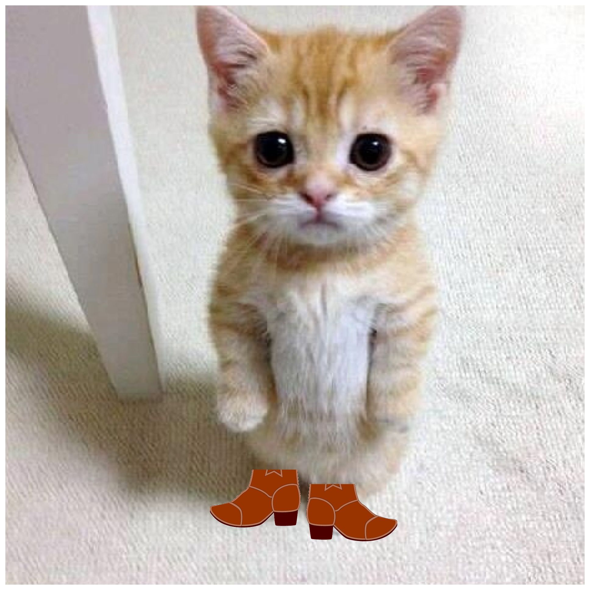 Puss and Boots Lol