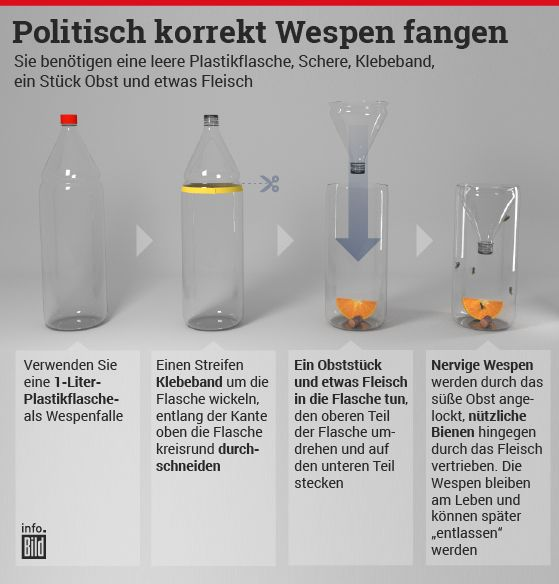 Photo of Tips against the wasp plague: How to put the beasts to flight www.bild …