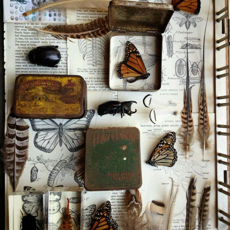 Pin by TroppoBella on Naturalist of curiosities
