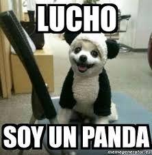 Resultado De Imagen De Memes En Espanol Fotografias Divertidas De Animales Gatitos Divertidos Memes De Animales