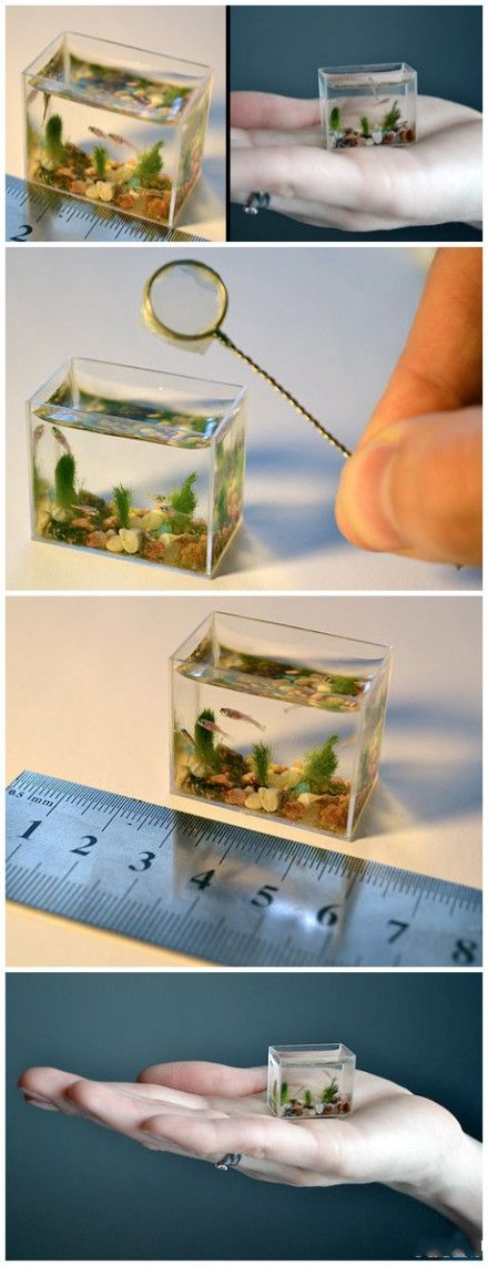 The World S Smallest Aquarium Lol Pinterest Aquarium Small