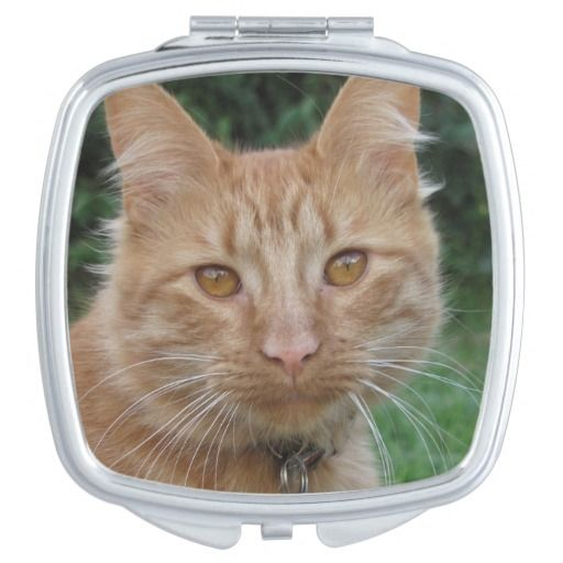 cat compact mirrors