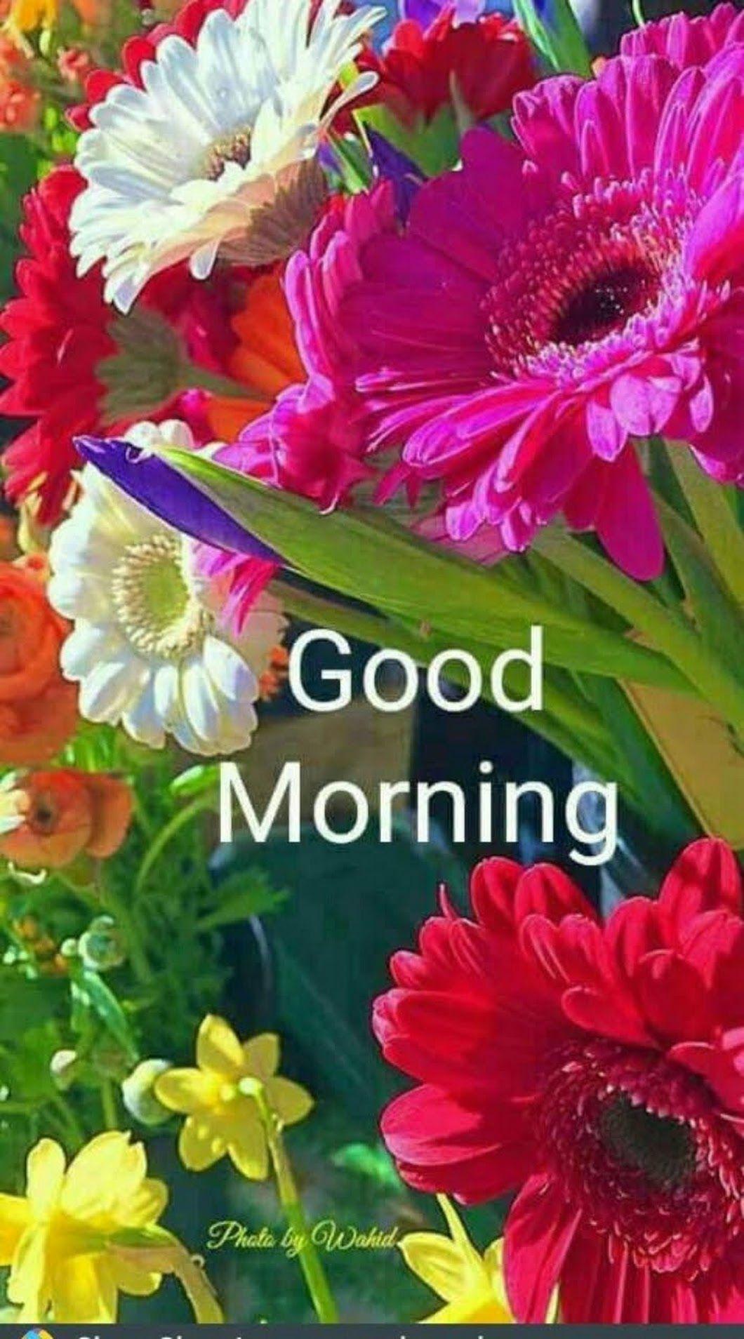 Hi friends good morning photos