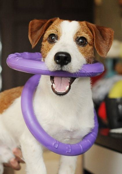 Puller Interactive mini toy for dogs...looks fun!