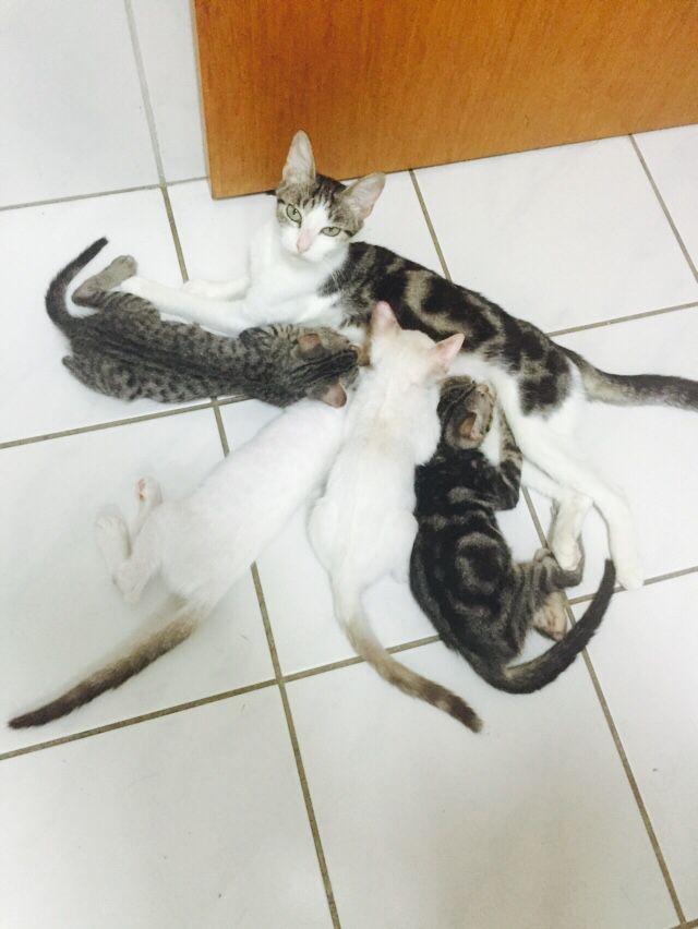 Linda gatinha e seus filhotes.... Ainda esperando serem castrados. Para estarem disponíveis a adoção.