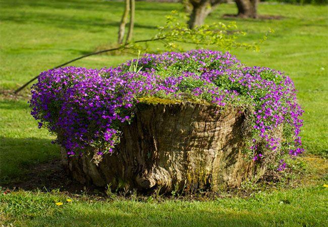 Plant Blomster I En Gammel Trestubbe Med Billeder Haveideer Blomsterhave Planter