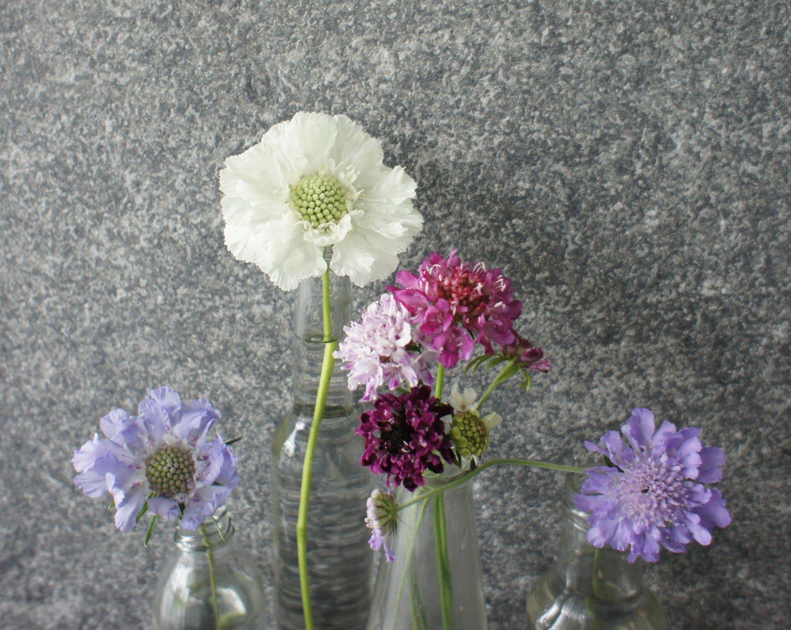 Scabiosa In Bud Vase Astilbe Flower Flowers Bouquet Flowers