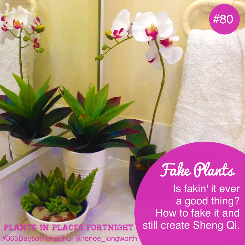 Day 80 Plants In Places Feng Shui Fake Plants Aren T Such A Bad