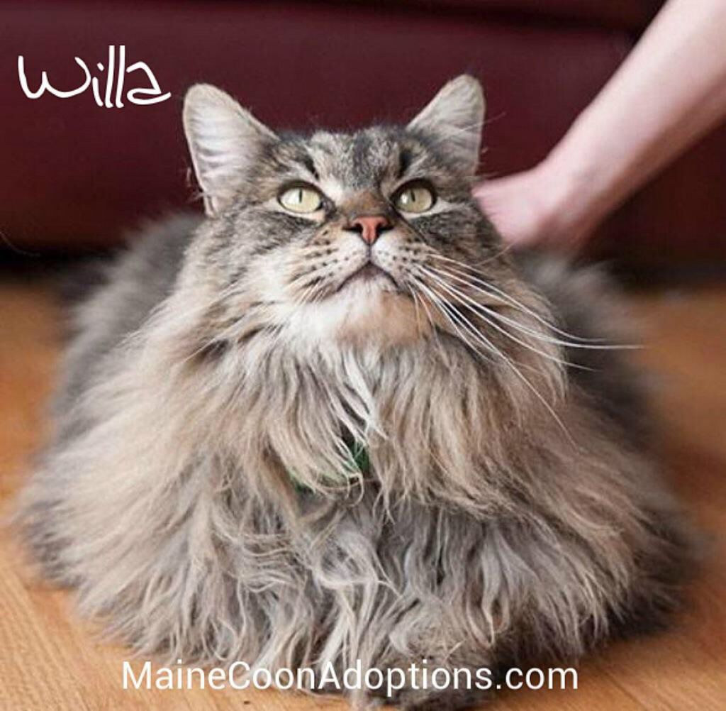 Pin On Cat Portraits