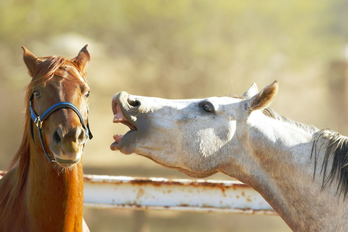 hennissement cheval