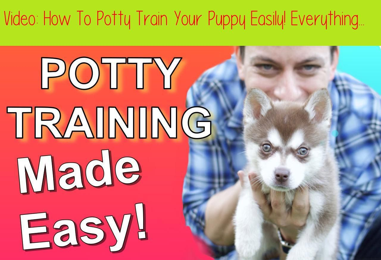 How To Potty Train Your Puppy Easily Everything You Need To Know