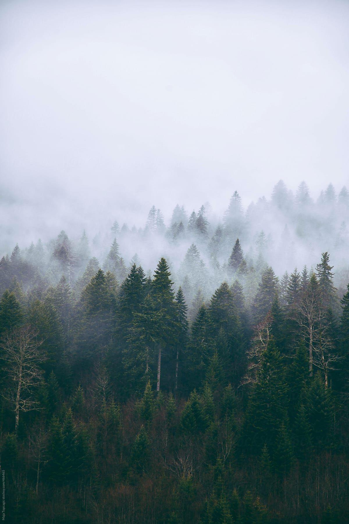Обои misty, forest, Road. Природа foto 17