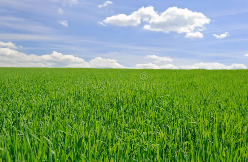Field of grass. Field of green grass and wonderful sky , #spon, #grass,  #Field, #green, #sky, #wonderful #ad | Field, Grass, Stock photography free