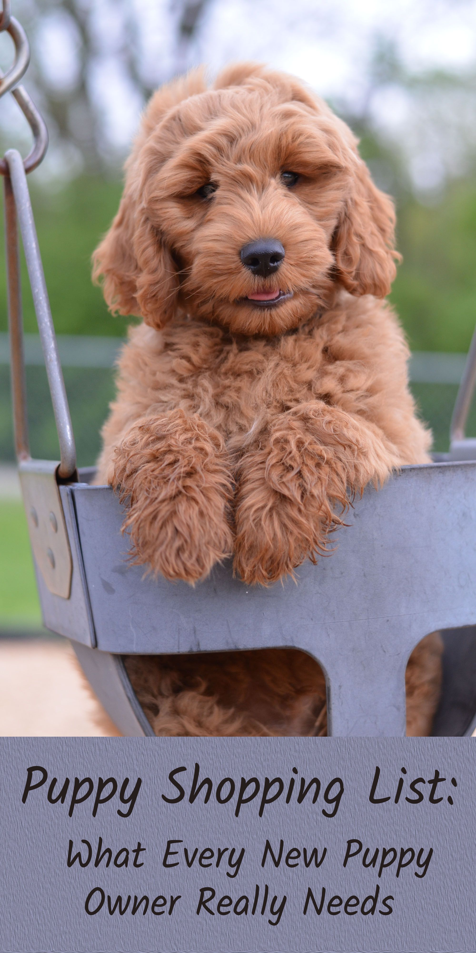 Goldendoodle Puppy Shopping List Goldendoodle Puppy