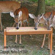 Deer Errrr Bear Feeders For Your Home Deer Feed Deer Feeder Diy Bird Feeding Station