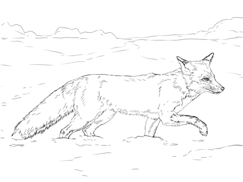 Red Fox Walking On Snow Coloring Page Free Printable Coloring Pages Fox Coloring Page Animal Coloring Pages Animal Drawings