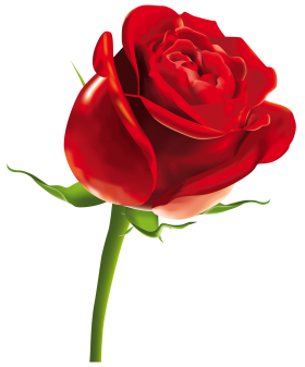 Pin By Suneel On Cgggh Red Rose Png Red Rose Drawing Single Red Rose