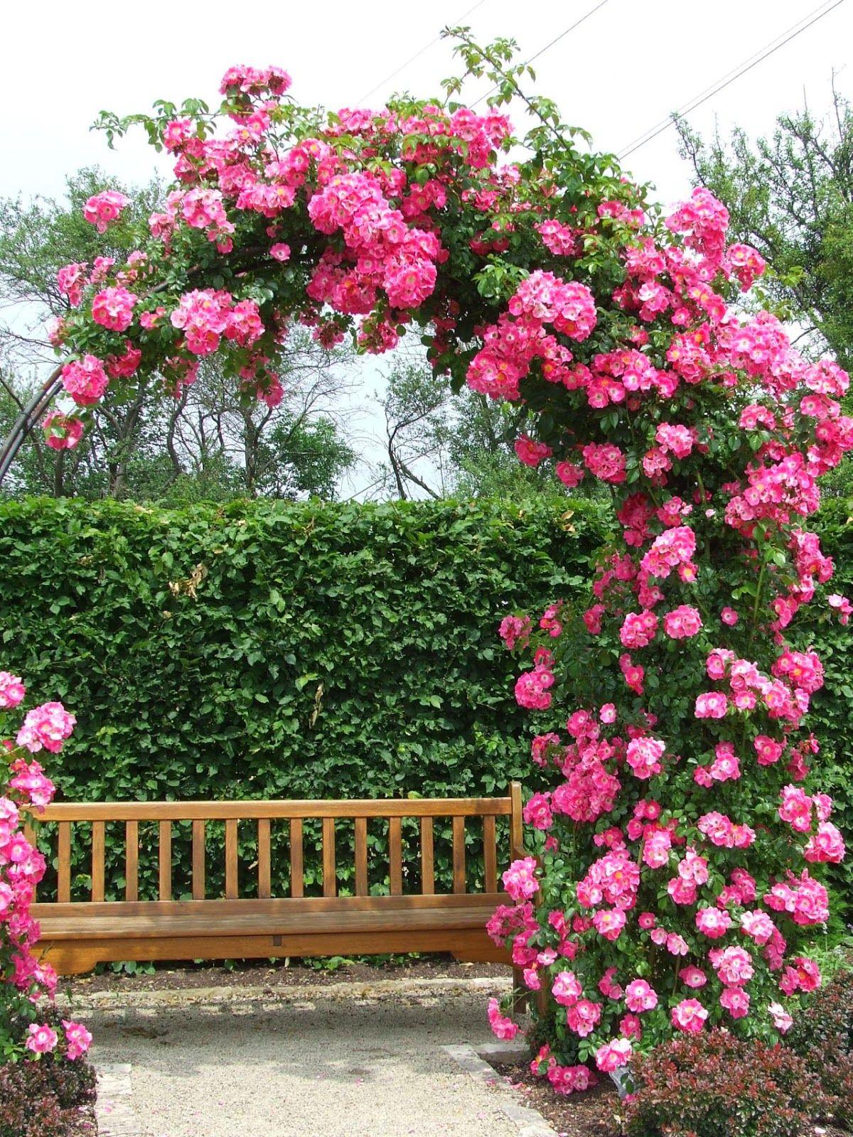 Garden Archways With Images Garden Archway Garden 400 x 300