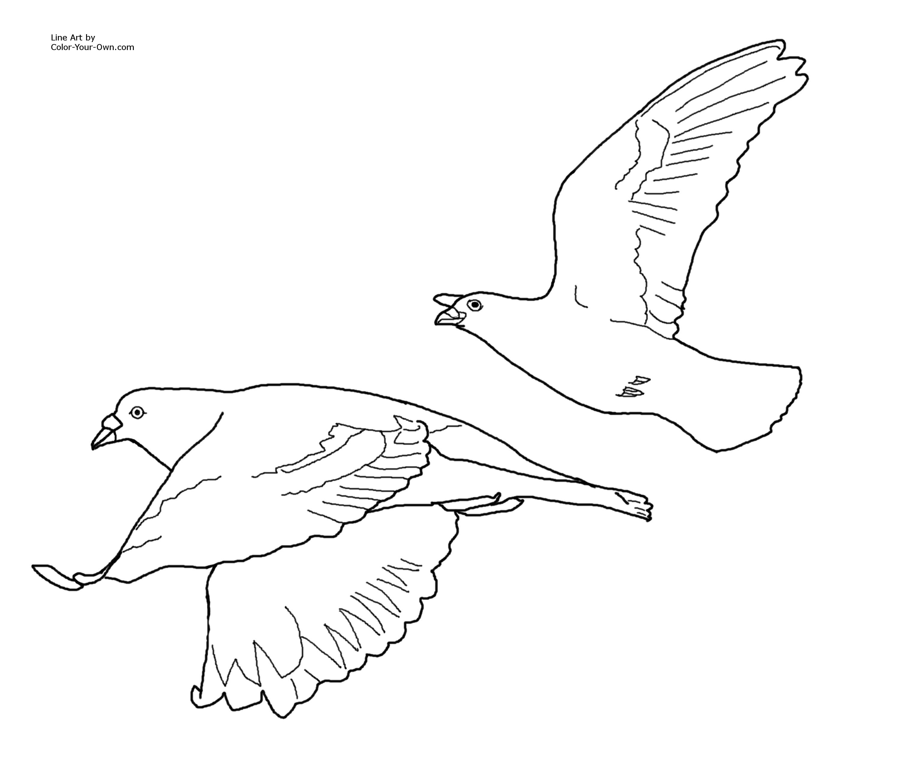Pin By Aliya On Designspatterns Bird Coloring Pages Coloring Pages Bird Drawings