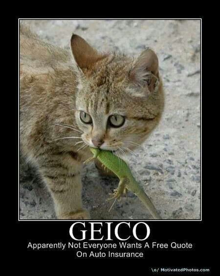Geico Apparently Not Everyone Wants A Free Quote On Car Insurance Funny Animals Walmart Funny Funny Cats
