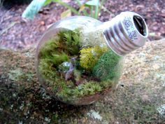 terrarium pflanzen - Google-Suche