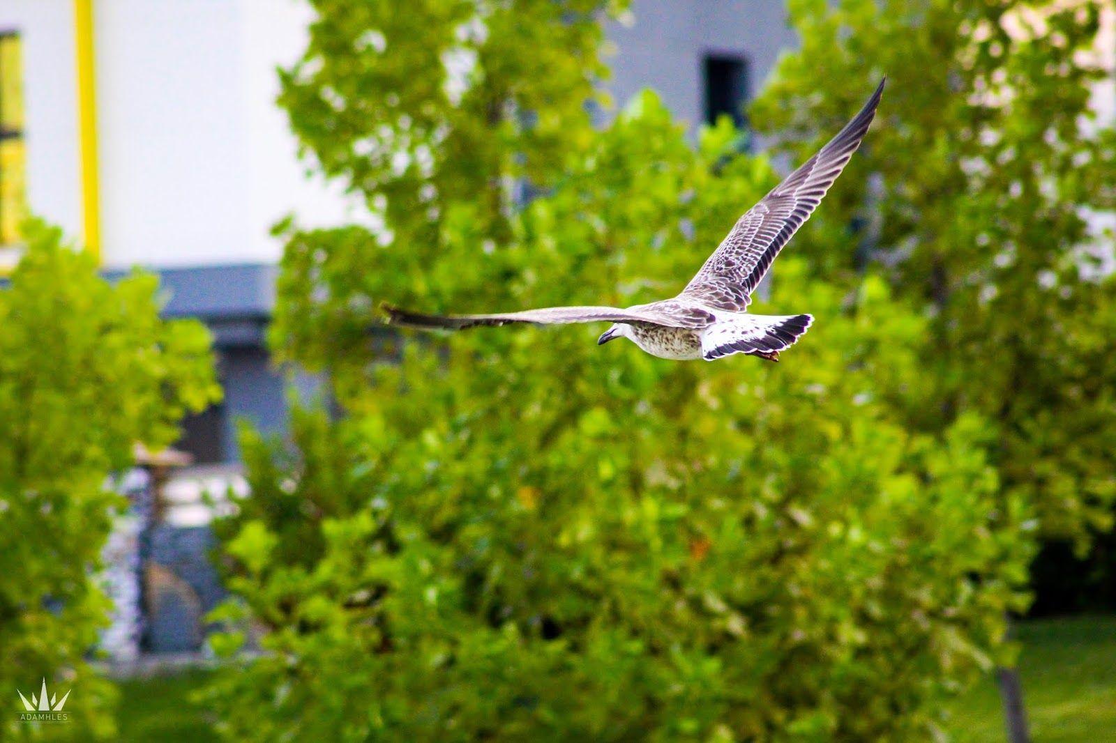 تصوير طائر النورس في السماء خلفية جميلة Animals Birds Bird