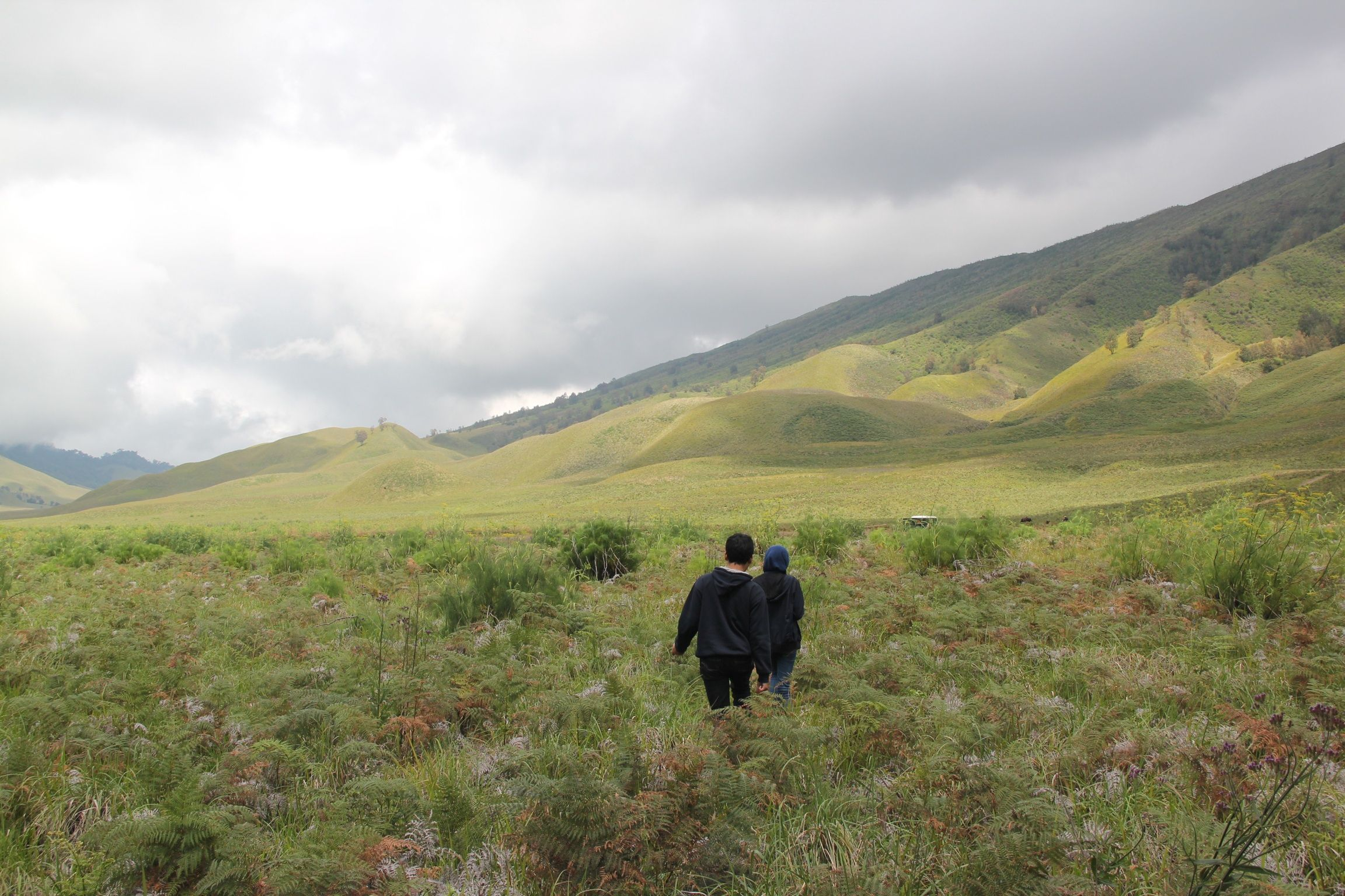 Padang rumput di kaki gunung Bromo