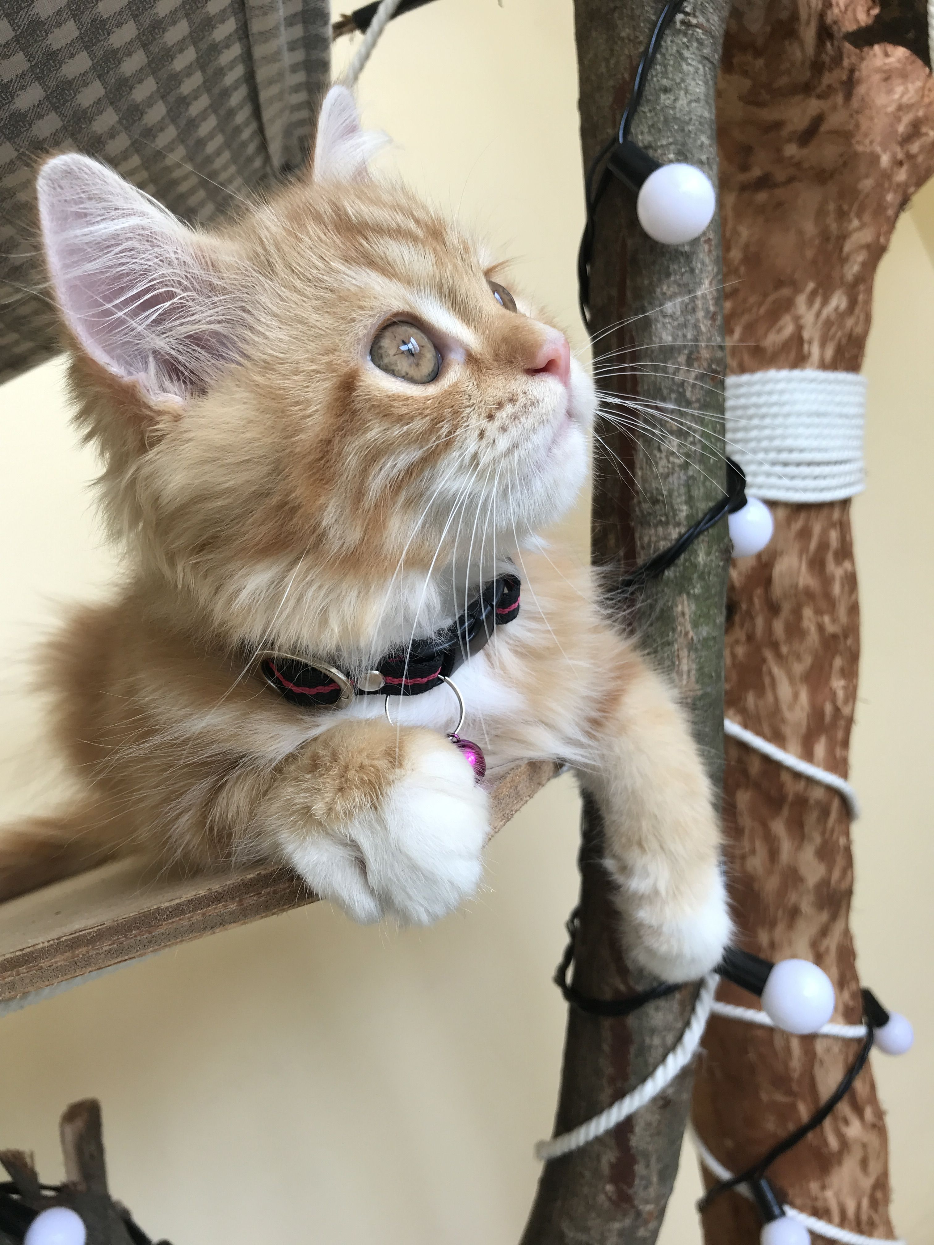 My Kitten Cute Cats And Dogs Cute Cats Kittens Cutest