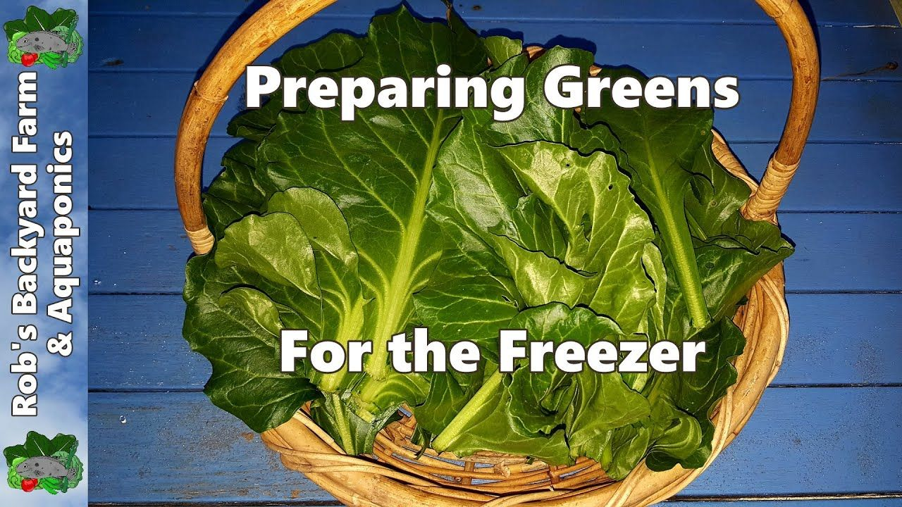 Freezing Greens & a Closer look at the Perpetual Spinach