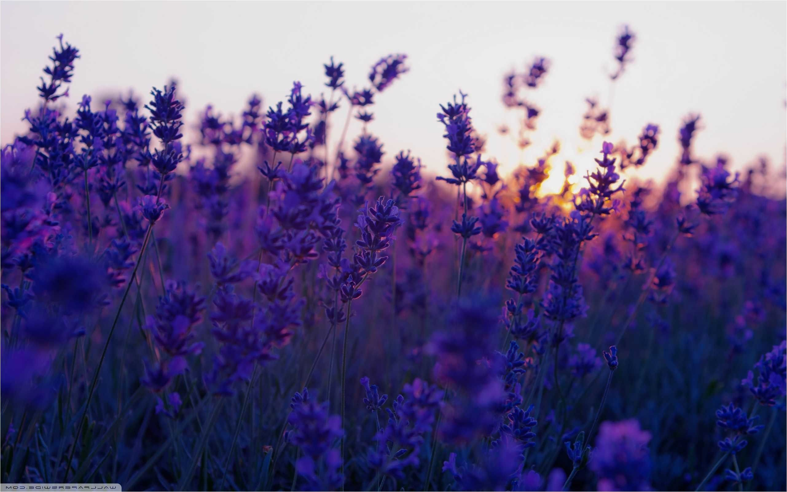 76 Lavender Wallpapers On Wallpaperplay In 2020 Computer Wallpaper Laptop Wallpaper Aesthetic Desktop Wallpaper