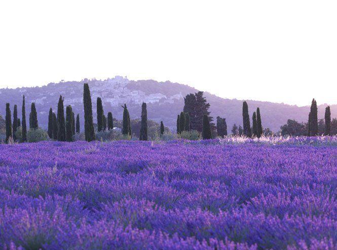 Прованс в интерьере: 5 ключевых приемов   Marie Claire