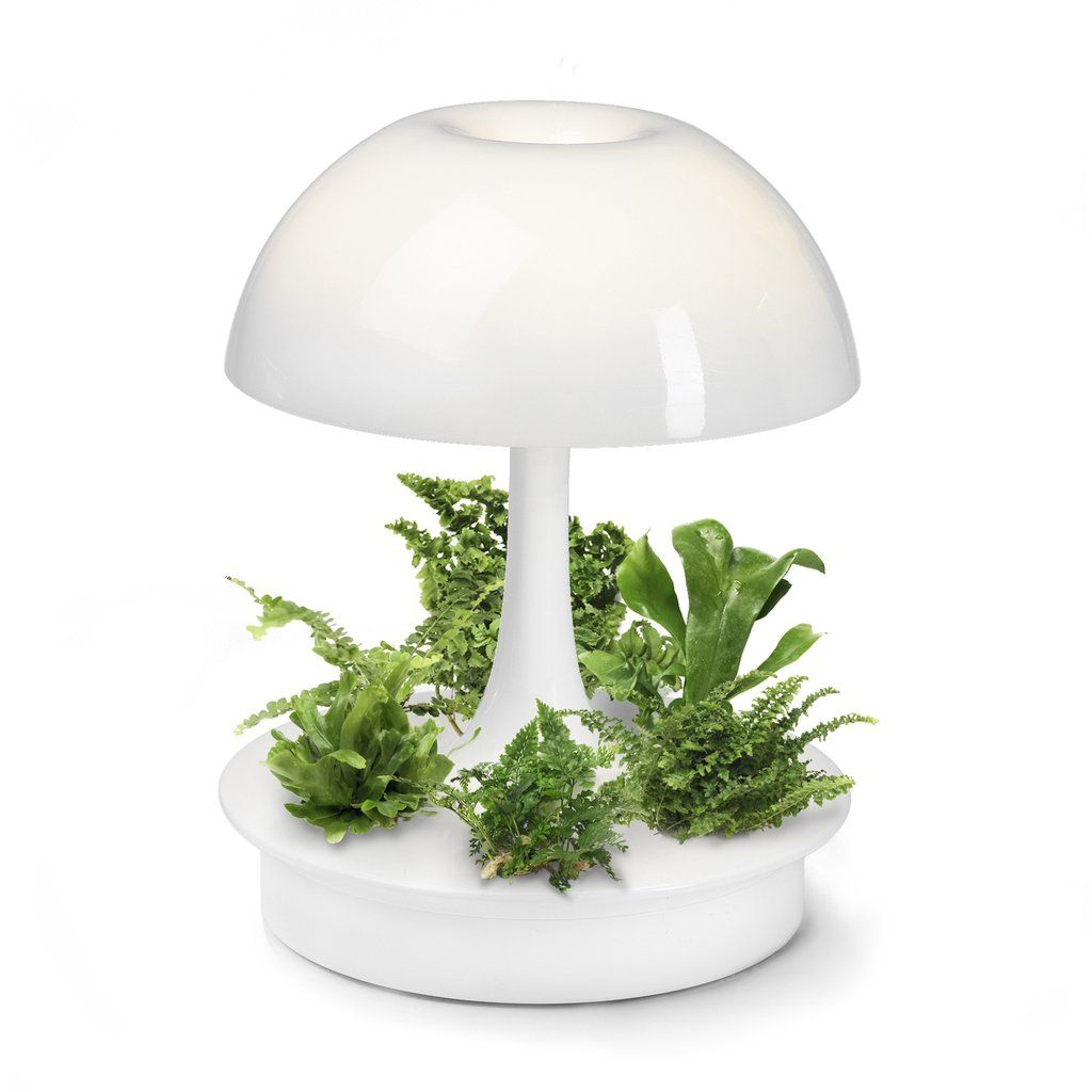 AMBIENTA  The Living Lamp   Sage Vertical Garden Systems, LLC