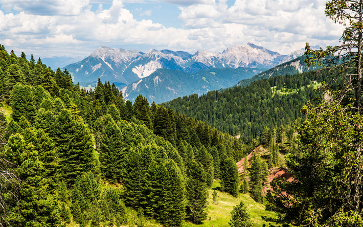Download Wallpapers Swiss Alp 4k Summer Mountains Forest Images, Photos, Reviews