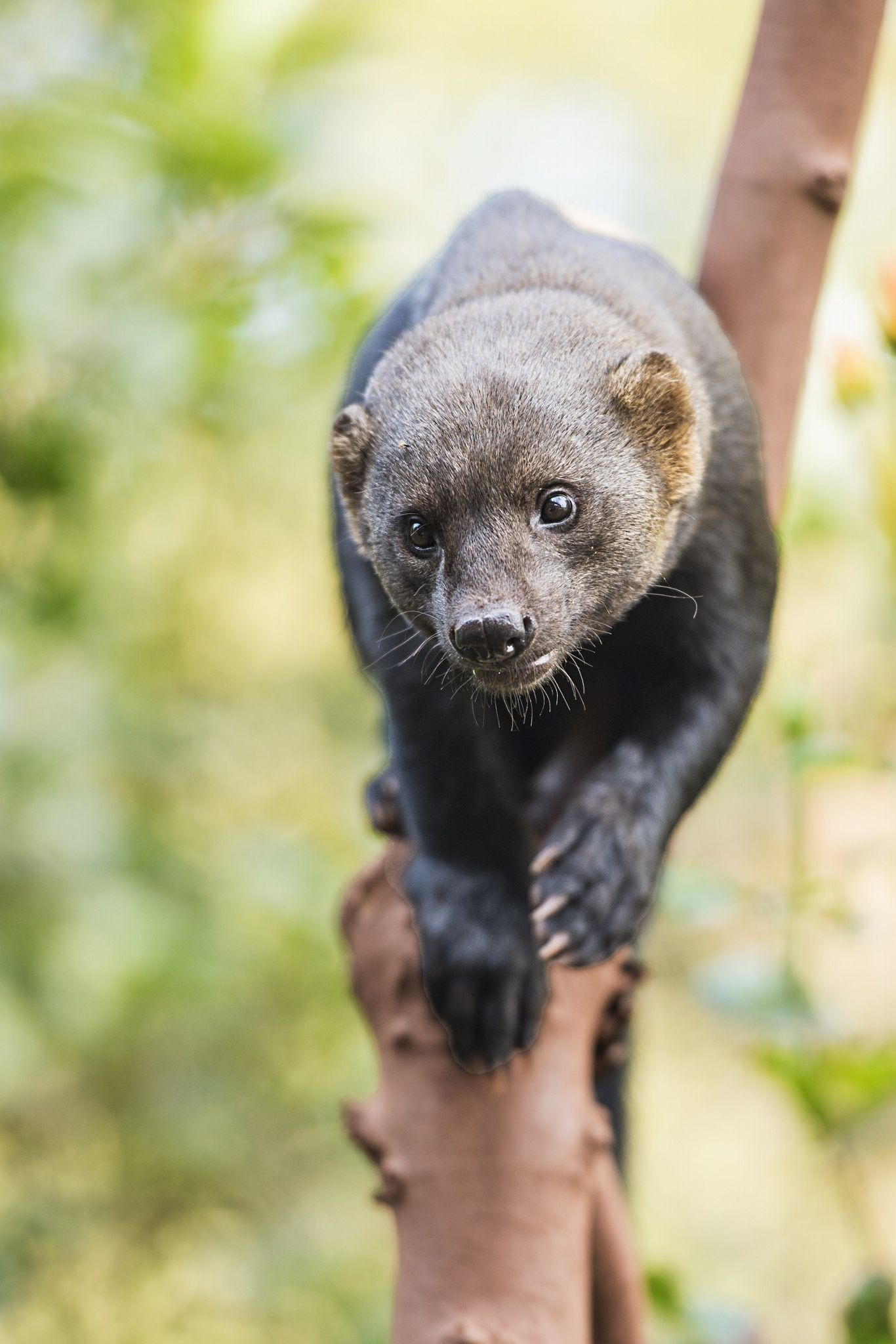 Tayra / by Colin Langford on 500px Animales, Naturaleza