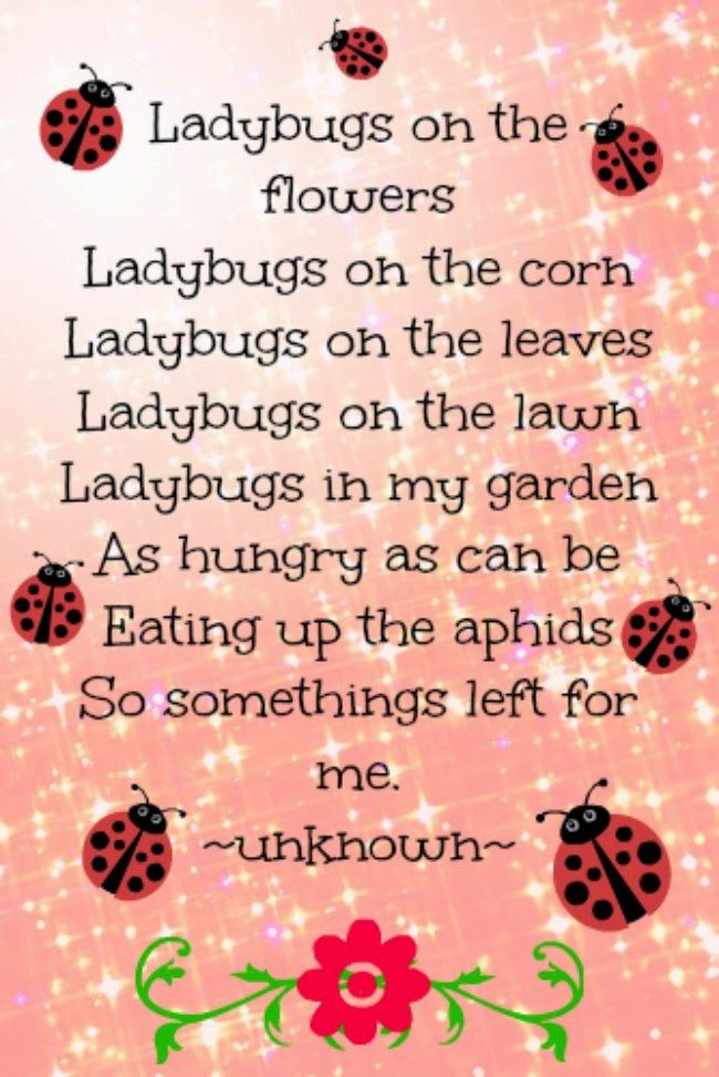 How to attract ladybugs to your garden, ladybug poem