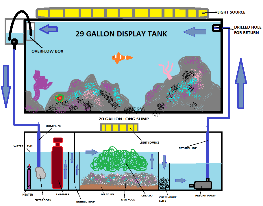 Pin by Christy Yale on Satlwater    Aquarium         Aquarium        Aquarium    sump     Saltwater    fish tanks