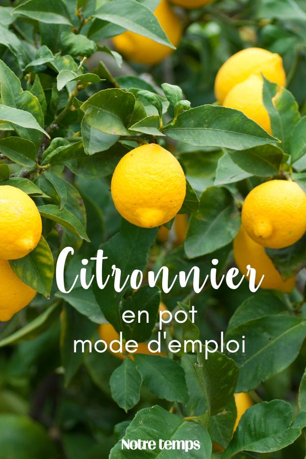 Jardin comment semer des graines de citron dans un pot - Comment faire un beau jardin potager ...