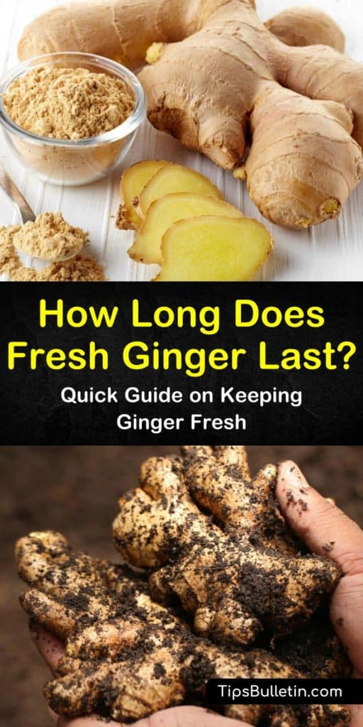 Quick Guide on How Long Does Fresh Ginger Last? (With ...