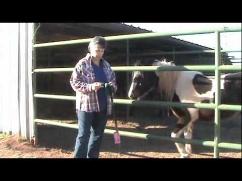Tools needed when Clicker Training a Horse