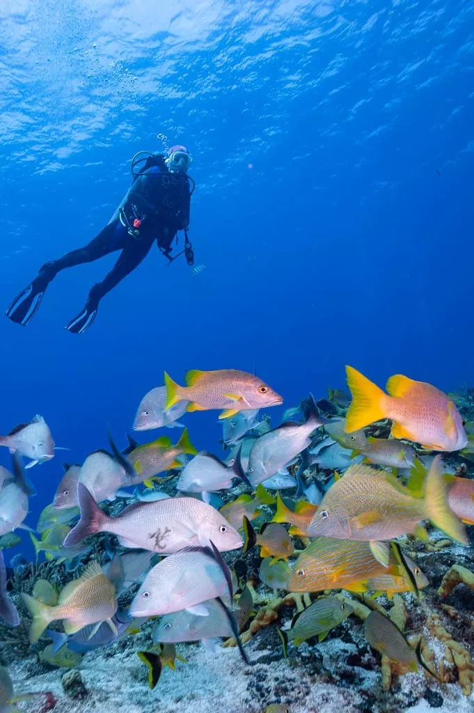 Fish Photography The Ultimate Undersea Skill Fish Underwater Photographer Pelagic Fish