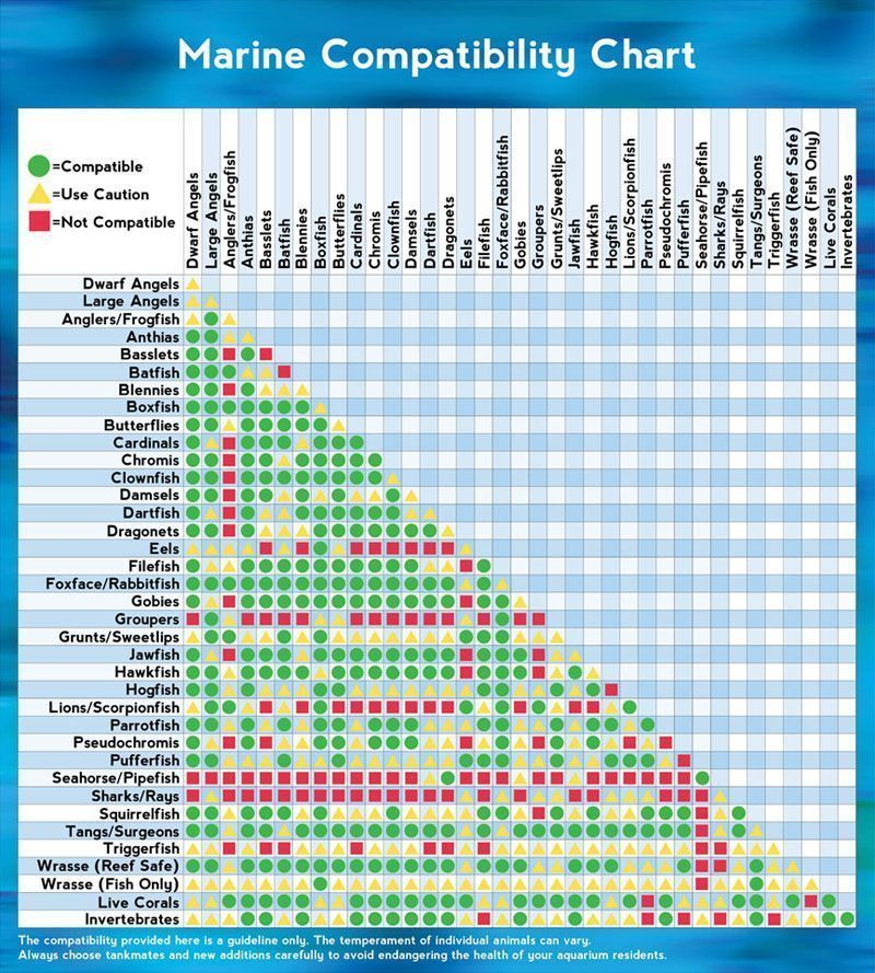 Marine Animal Compatibility Chart Created By The Pet Experts At That Fish Place That Pet Place An In 2020 Saltwater Fish Tanks Saltwater Aquarium Compatibility Chart