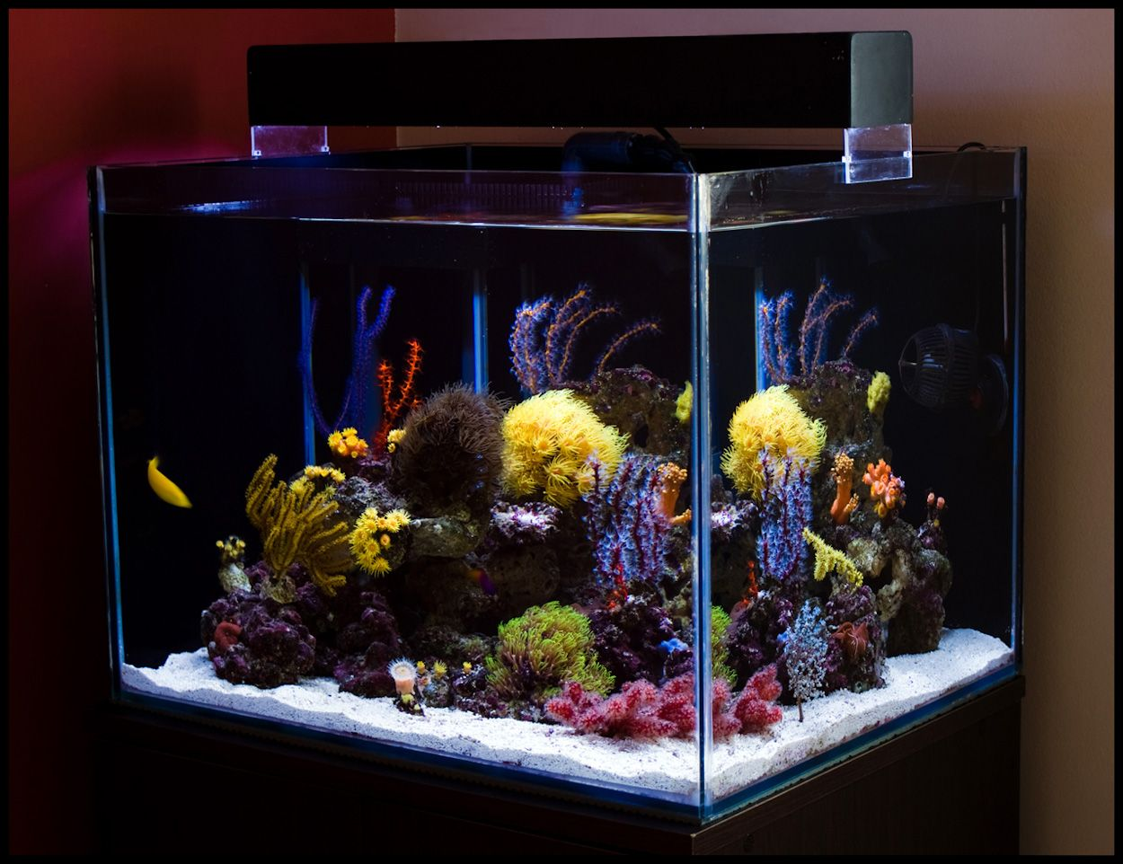 Fish aquarium karachi - All You Need To Know About Aquarium This Is How Would Look Like A List Of Several Things To Note Before The Fish Become Part Of Your Household
