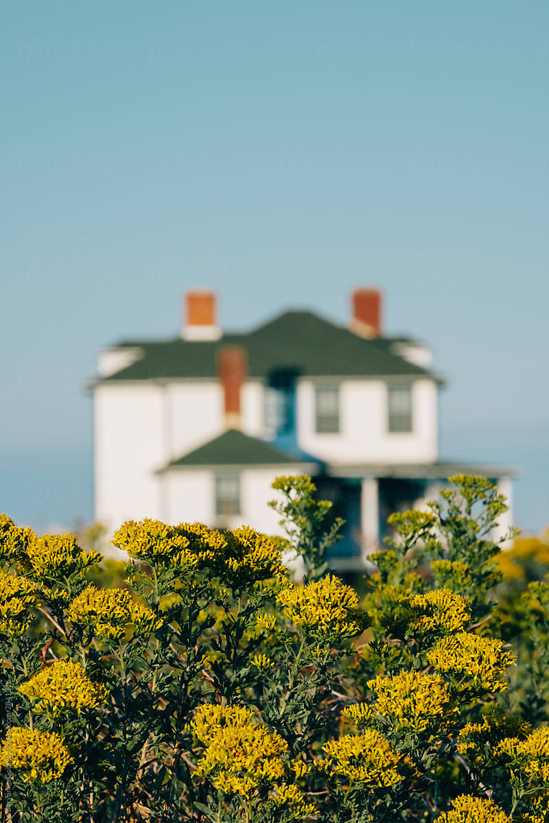 A Beautiful Filed Of Yellow Flowers With An Out Of Focus House In The Background Stockphotography Stocksy Farmhouse Cop House Old House Stock Photography