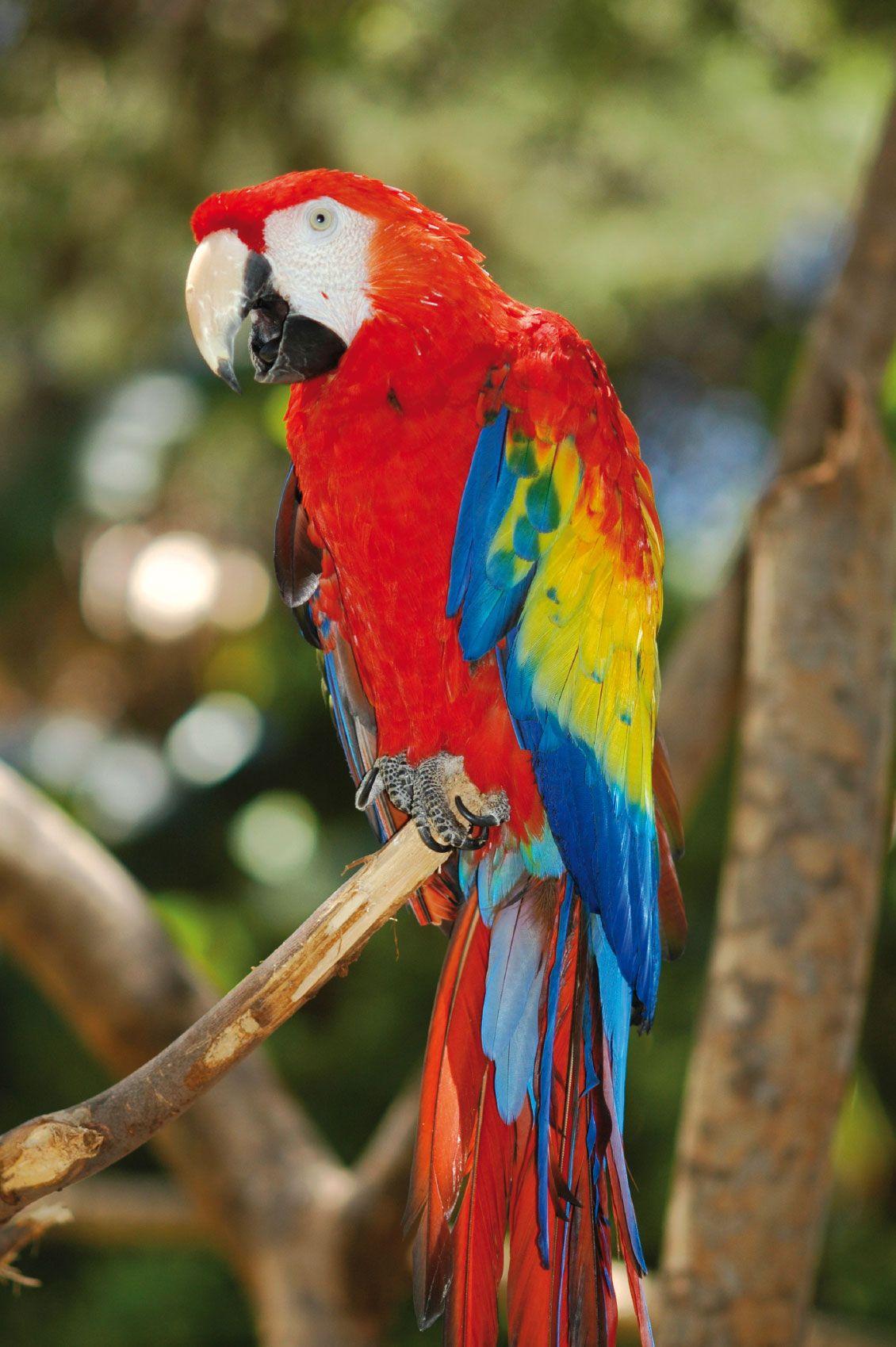 Papegaai google zoeken vogels pinterest bird and animal - Foto van de show ...