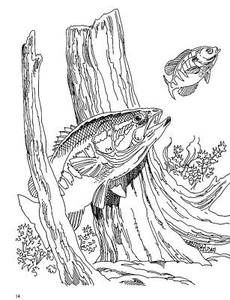 Bass Fishing Colouring Pages