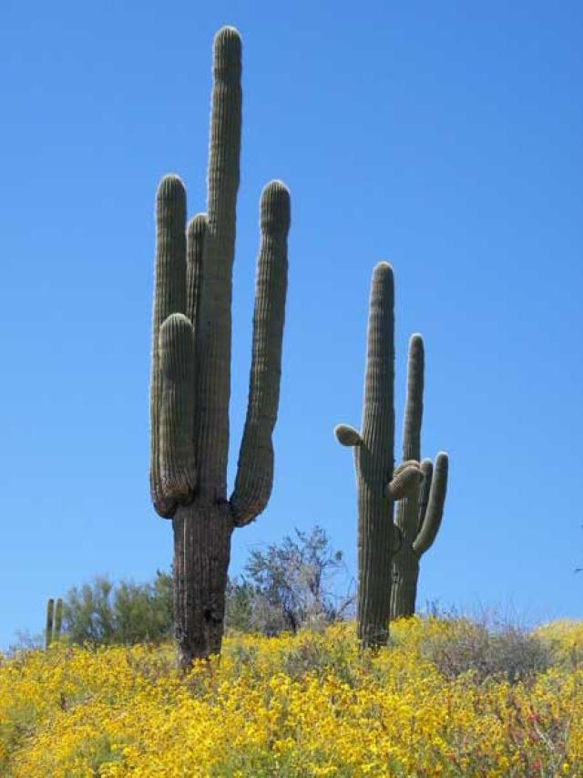 Cactus Plants and Flowers