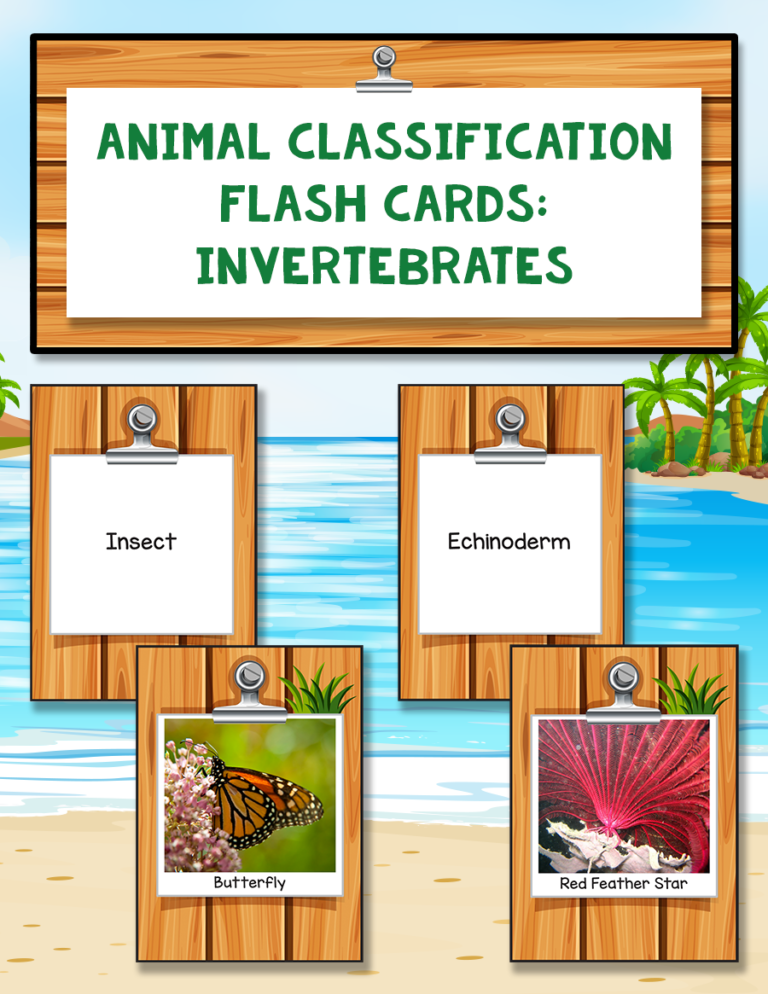 Animal Classification Flash Cards: Invertebrates | Warm
