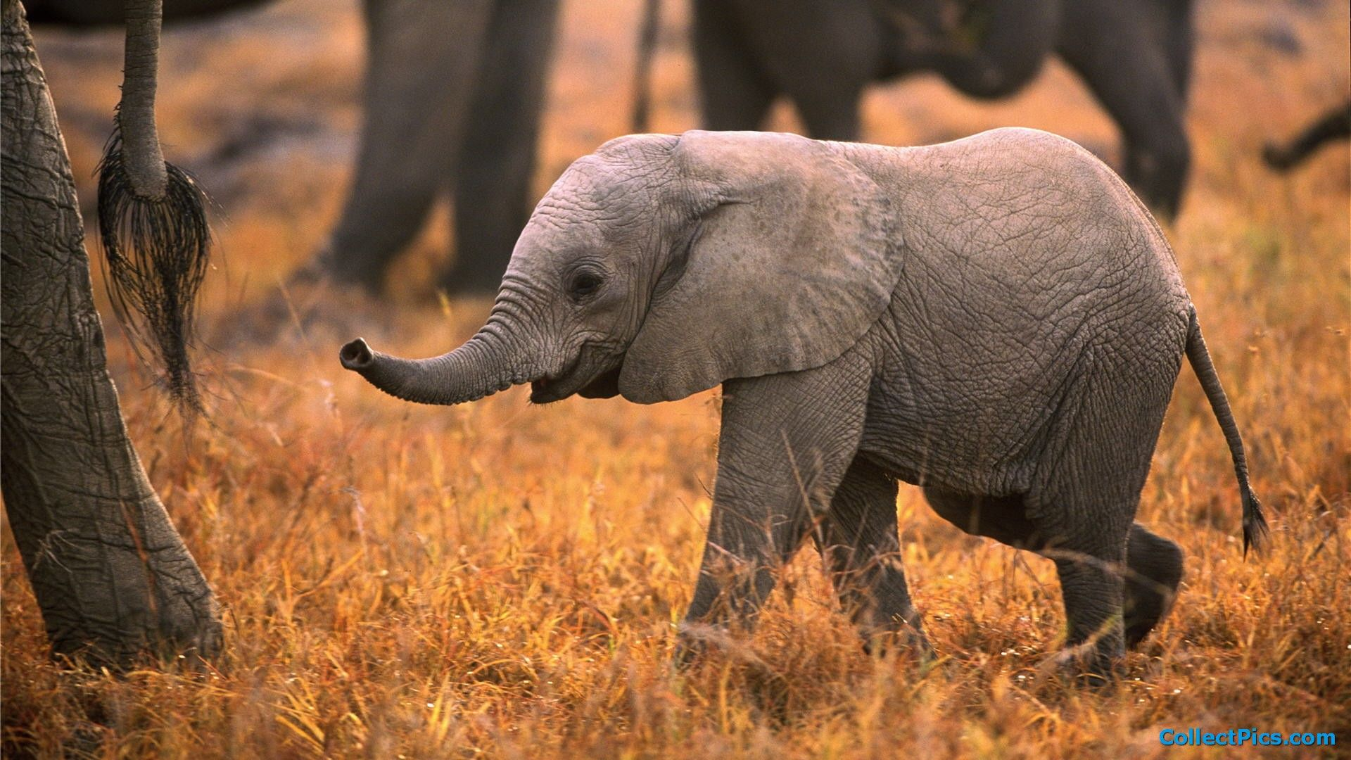 Baby Elephant Cute All Picture Elephant 2017 Baby