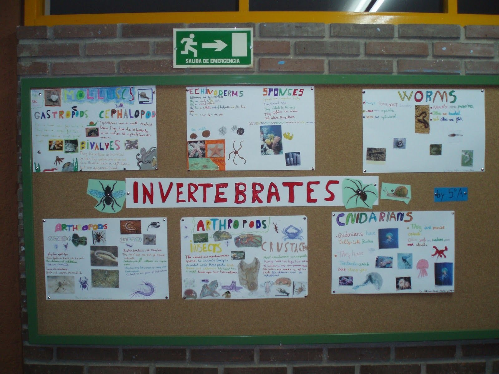 Bilingual Education Activities Vertebrates And Invertebrates